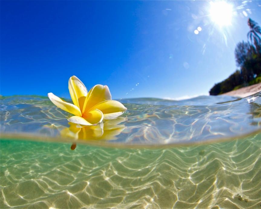 KONA COAST HAWAII YEAR END 2017 MARKETREPORT